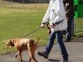 Jägerverein_Toggenburg_Hundegruppe_Übung_Rickenhof (2)