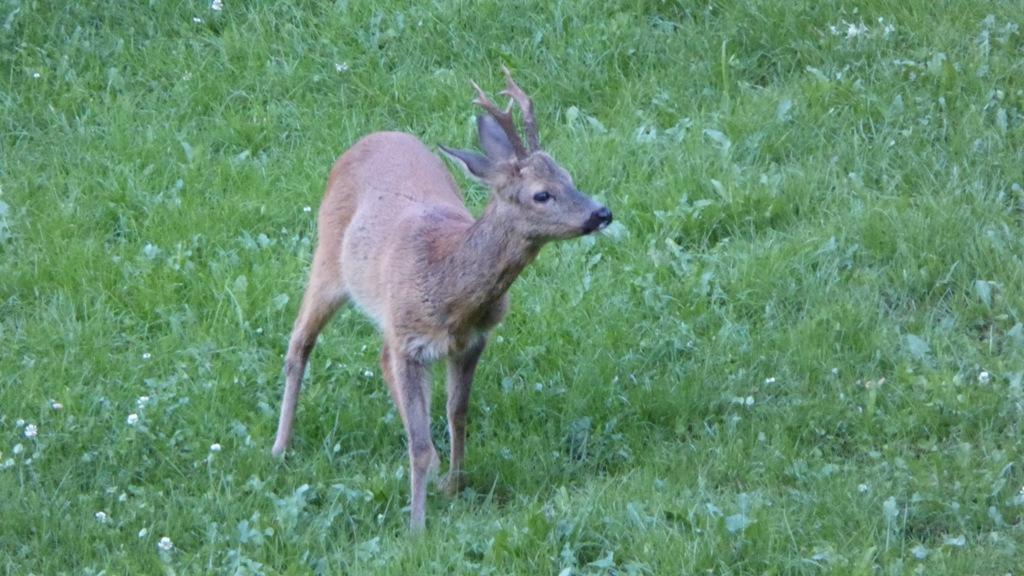 Impressioinen zur Jagd 2019 (16)