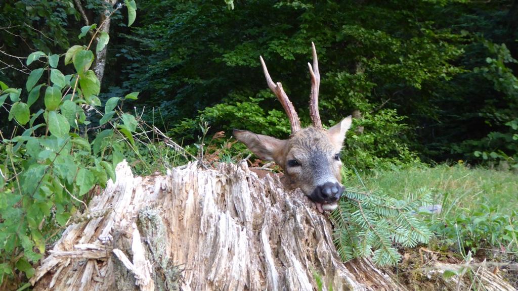 Impressioinen zur Jagd 2019 (6)